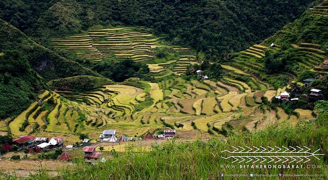 Ampitheater shaped rice terraces batad ifugao