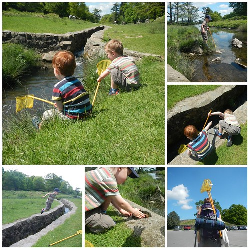 Stream dipping at Bradgate Park