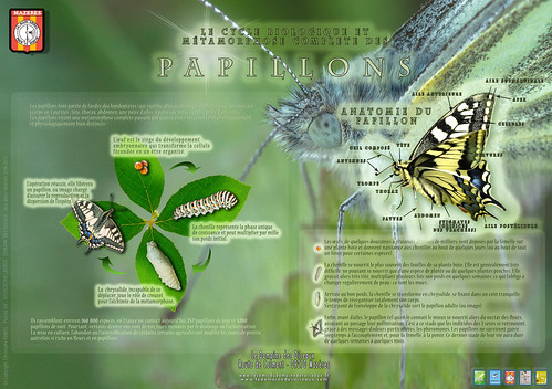 """Verso - Panneau pédagogique """"Lépidoptères"""" - DDO Ver1.1 Juin 2013 - (7000 x 4932)"""