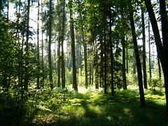 Forest near Vřesina