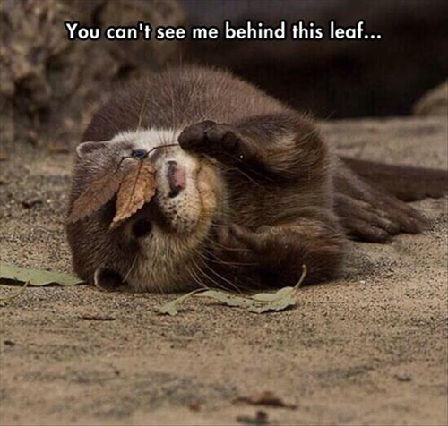 an otter lies on its side coyly on the earthy ground. It is holding a small twig with two brown leaves in front of its face, as if to hide, however ineffectually. Captioned 'You can't see me behind this leaf...'