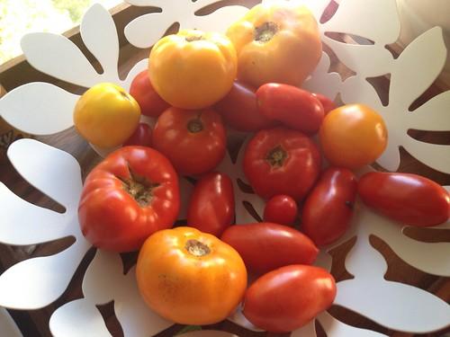 tomato season