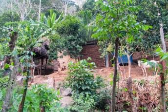 Misael wilde eigenlijk liever hier wonen in een lemen hutje met acht man.