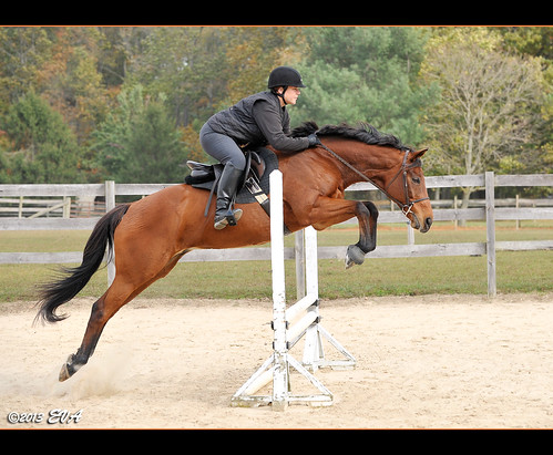 "Wizard said, ""Dressage, schmessage. Let's jump."""