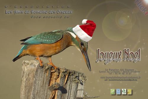 Carte de Noel 2013 - Les Amis Du Domaine Des Oiseaux V1a