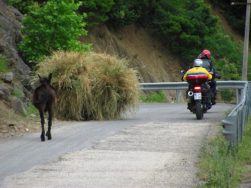 Donkey Loaded with Hay