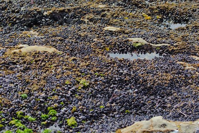 seashells 0000 4 Mile Beach, CA, USA
