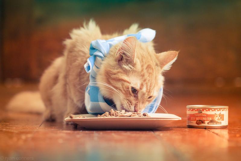 Rosebud trying Merrick Cat Food