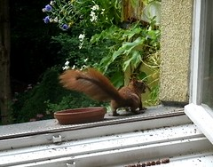 Eichhörnchen 3.7