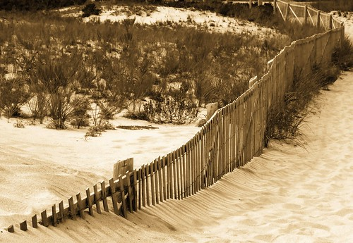 Beach Path Fence