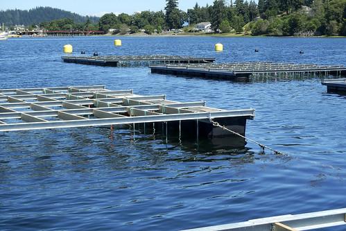 Rafts on grid