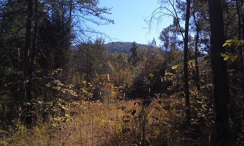 Taylor Ridge in the distance from James H. Floyd Sloppy State Park during Autumn