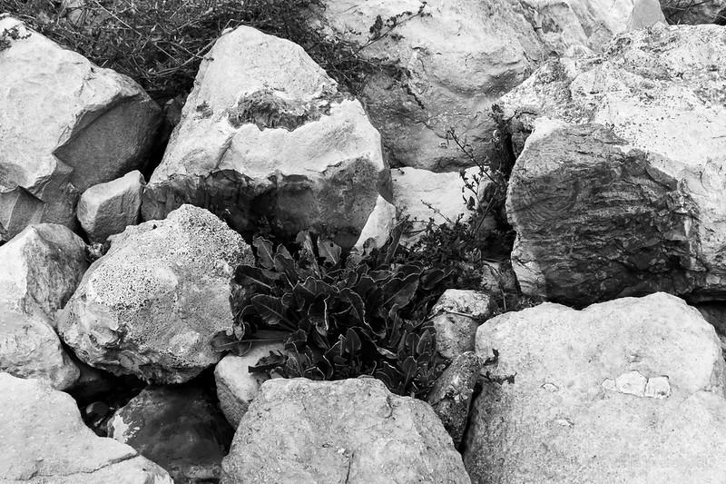 Growing in the rocks