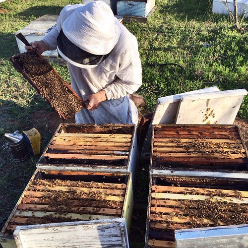 Mark inspects some Nucs at Big Oaks