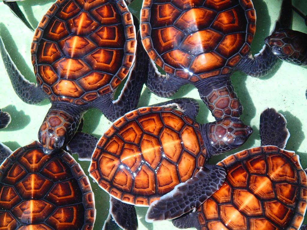 Sea turtle protection centre, Gili Meno, Indonesia