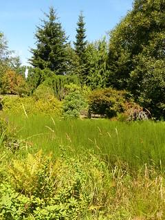Garden Wetland