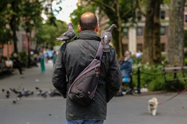 Pigeons sitting on the shoulders