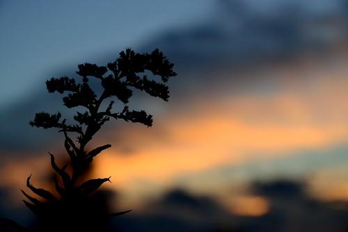 Sonnenuntergang im Westerwald by Alexandra Wirth