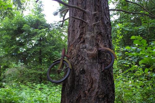 Bike tree, Vashon Island