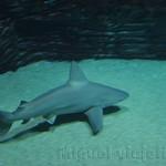Oceanografic Miguel, acuario 09