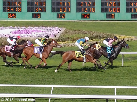 090413goldengatefields07