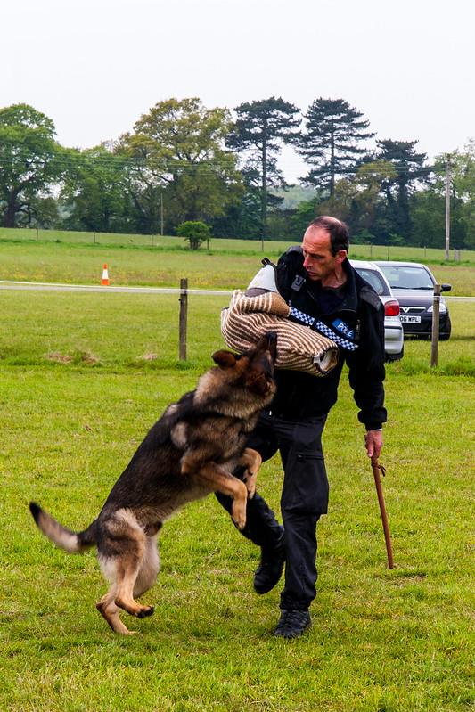 Police Dog demonstraion