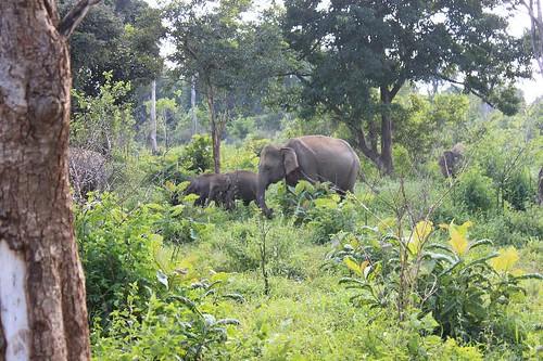 20130115_7192_elephant-family_Vga
