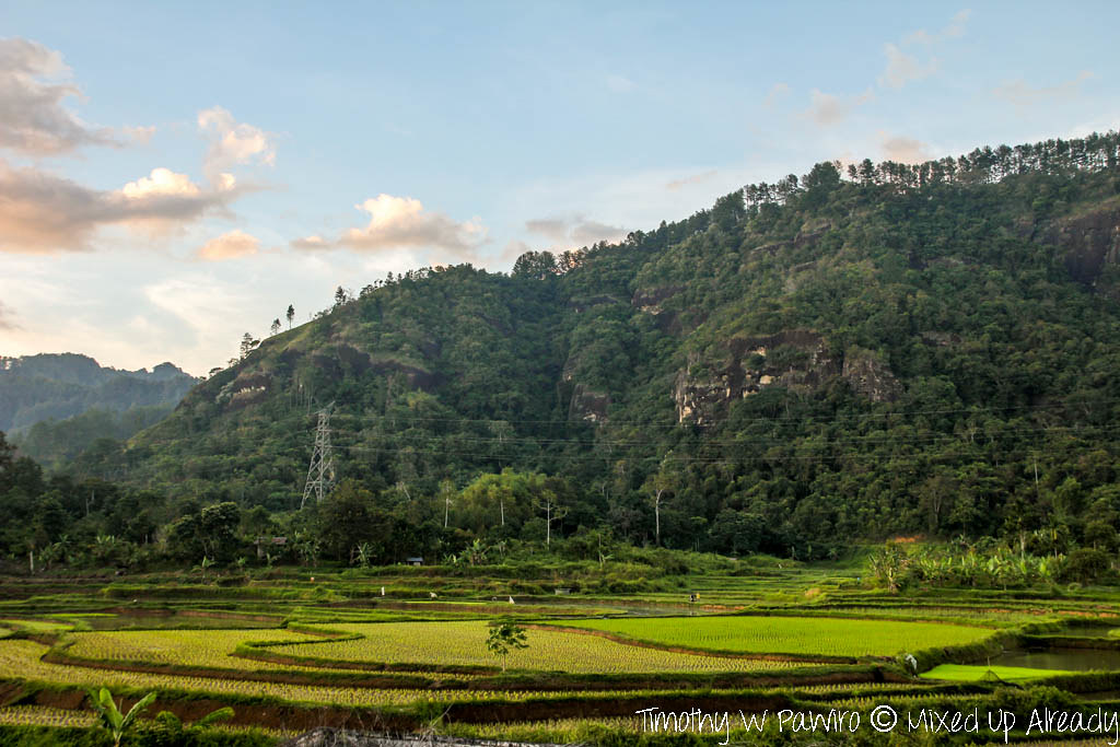 Indonesia - West Sumatra - Istana Pagaruyung (Pagaruyung Palace) - The view of paddy field behind the palace