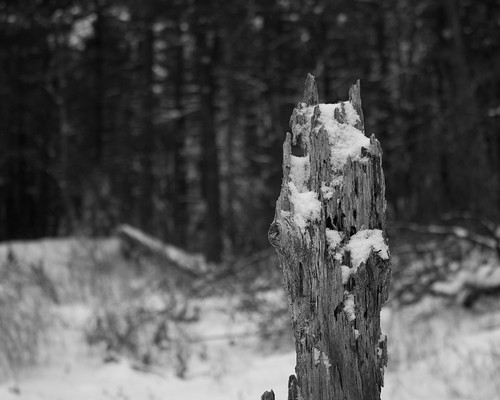 Stump by Christopher OKeefe