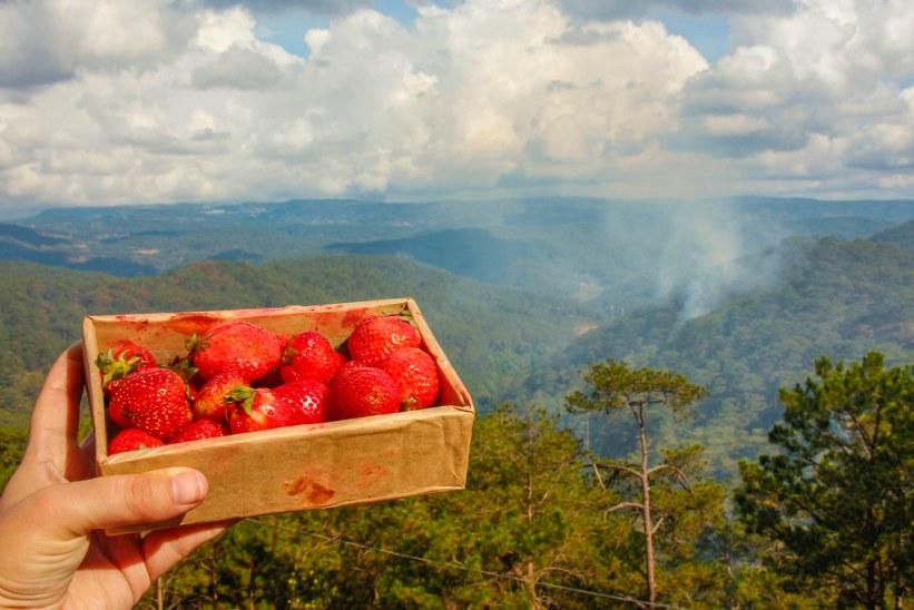 jordbær og action i Dalat