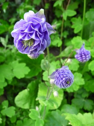 In my garden, May 2013