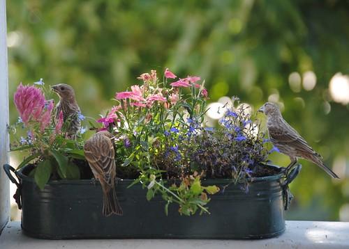 birds and flowers (5/6)