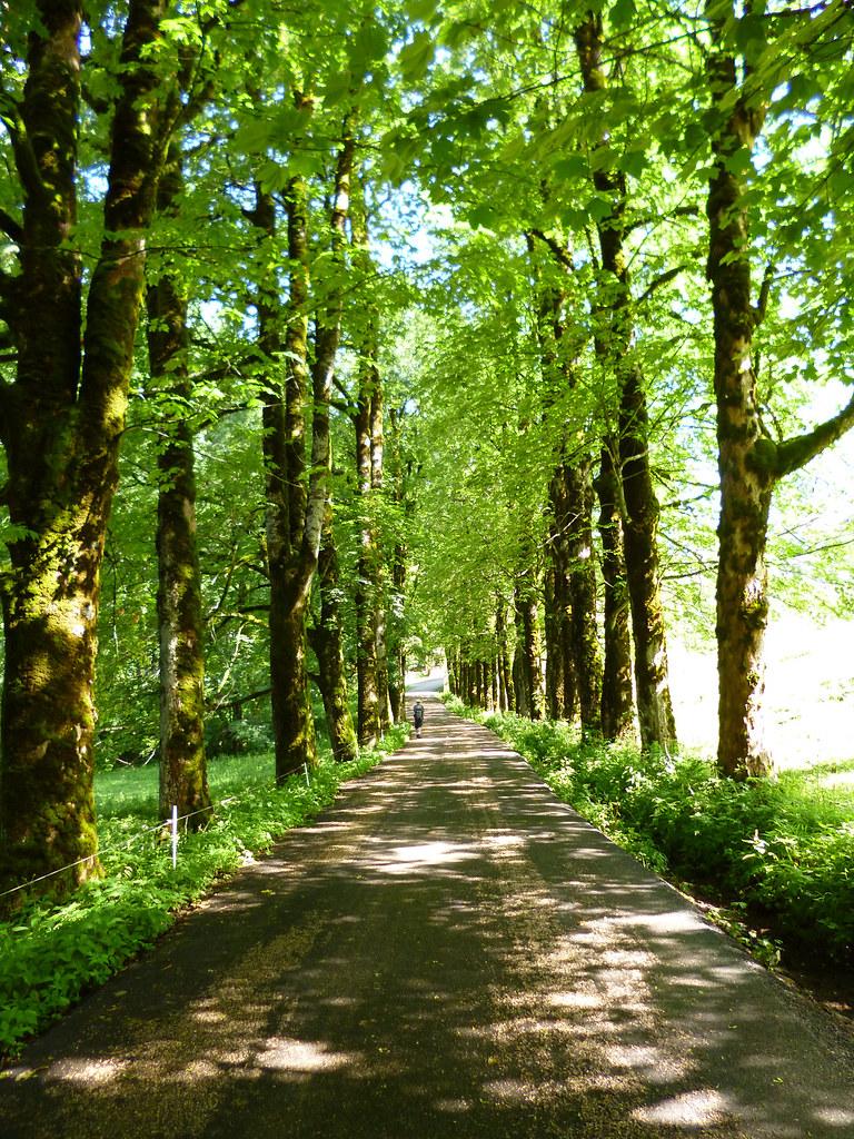 Chemin du monastère de la Grande Chartreuse