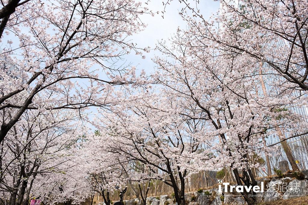 首尔赏樱景点 乐天塔石村湖 (36)