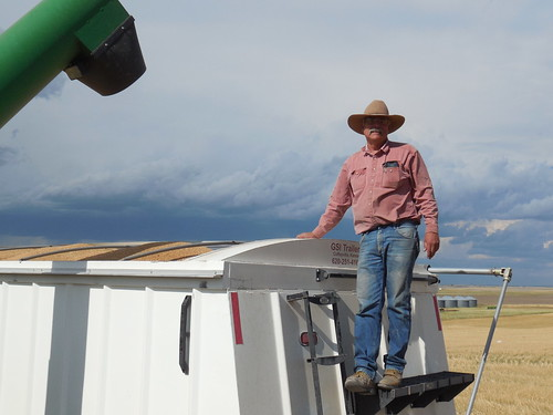 Uncle Carl watching the grain cart unload