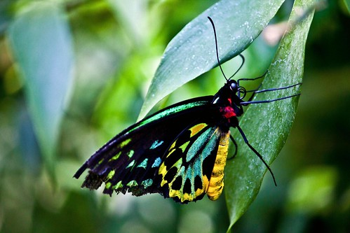 Resting Butterfly by Richard Le Sauvage
