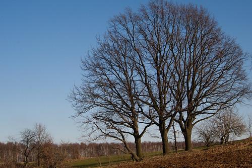 Drei Bäume by grindcrank