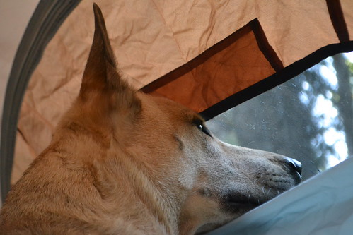 Evey looking out the tent window - Jude Crook photo