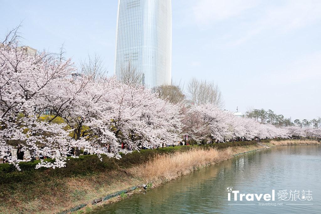 首尔赏樱景点 乐天塔石村湖 (41)