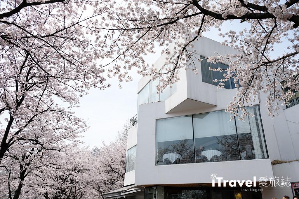 首尔赏樱景点 乐天塔石村湖 (38)