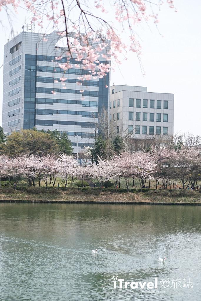 首尔赏樱景点 乐天塔石村湖 (29)
