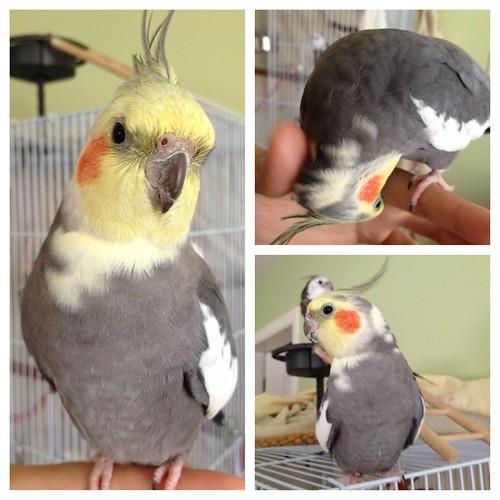 Meet Neko