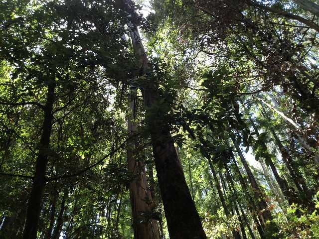 Mixed redwood forest