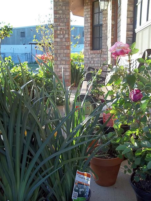 Plants needing planting