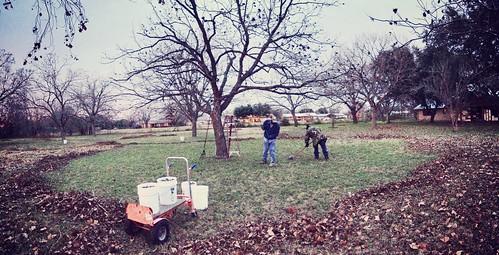 Harvesting delicious pecans