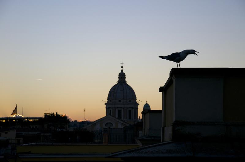Sunset and gull