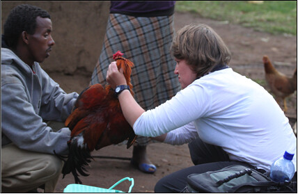 Marisol was examination the chicken for ectoparasites