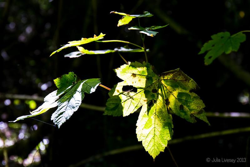 Sun and shade