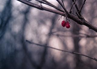 Winter Berries // 28 12 13