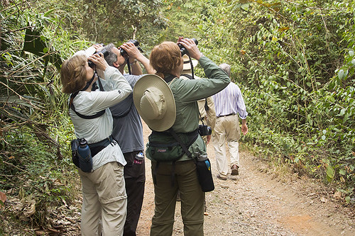 Panama: Birding Pipeline Road